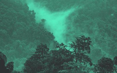 Reflecta.Network: Landing-Page-Inspektion für den Regenwald