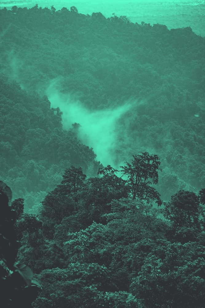 Ein Bild vom Regenwald