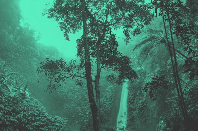 image showing the rainforest — a big tree in the foreground, a waterfall in the background